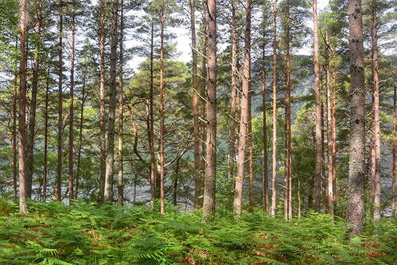 ecosse-camping_loch-ness-dores_08