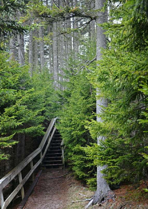02_2014-05_park-bay-of-fundy_point-wolfe