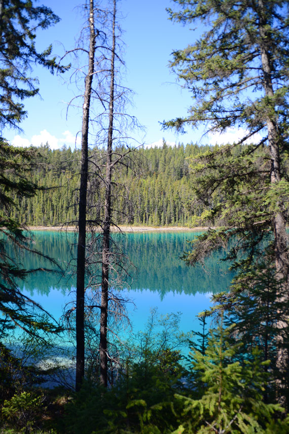 Canada_Alberta_Jasper-National-Park_Valley-of-the-five-lakes_08