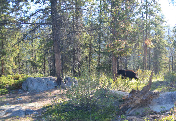 Canada_Alberta_Jasper-National-Park_Valley-of-the-five-lakes_11